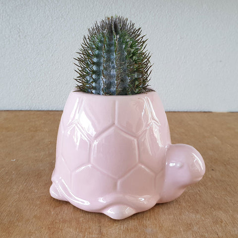 Pink Turtle Planter - The Chic Nest