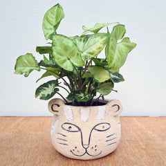 Terry Tiger Planter