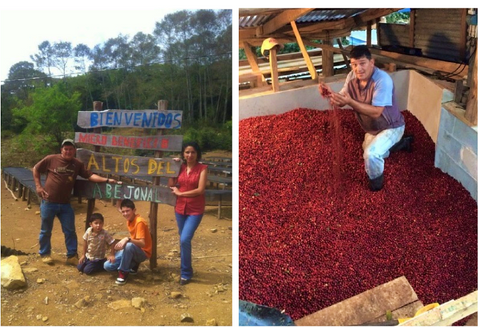 Costa Rica divino Nino taf coffee- Handcraft coffee