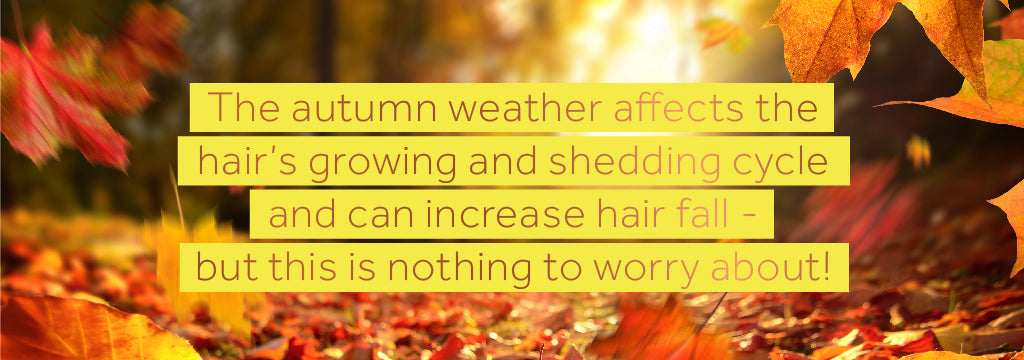 Image of text on a backdrop of autumn leaves explaining how autumn can affect hair fall but that this is nothing to worry about
