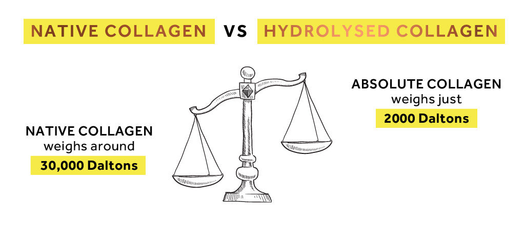 Graphic showing the weight of native collage molecules and Absolute Collagen weight