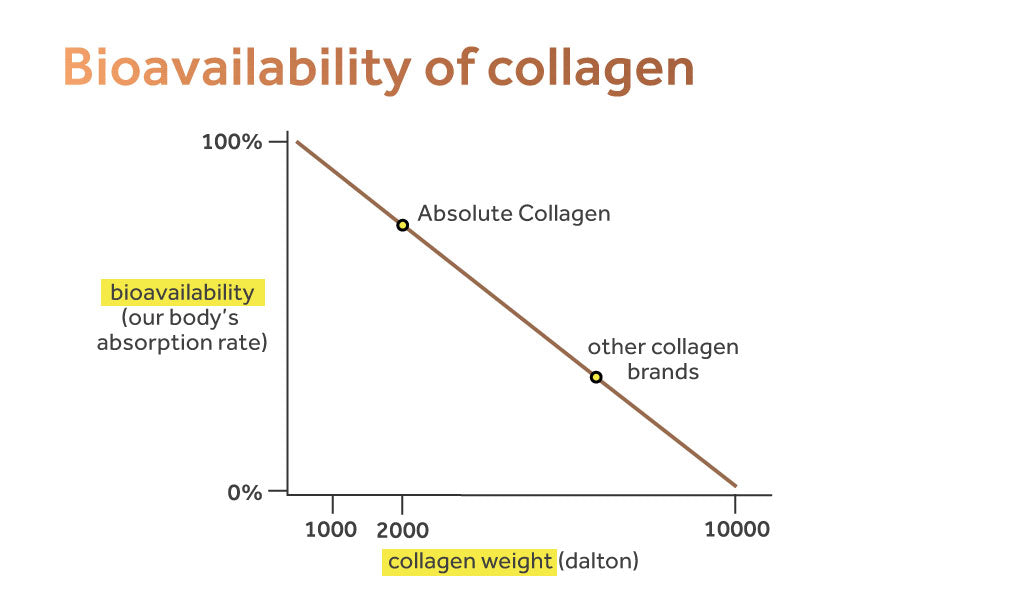 Graph showing the bioavailability of collagen - i.e the rate at which collagen is absorbed into the body.
