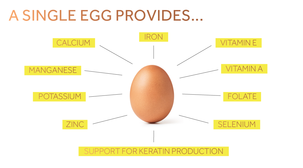 A graphic showing some of the vitamins and minerals provided by one egg