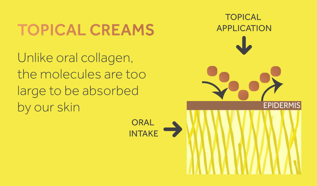 Graphic showing how topical collagen creams work.