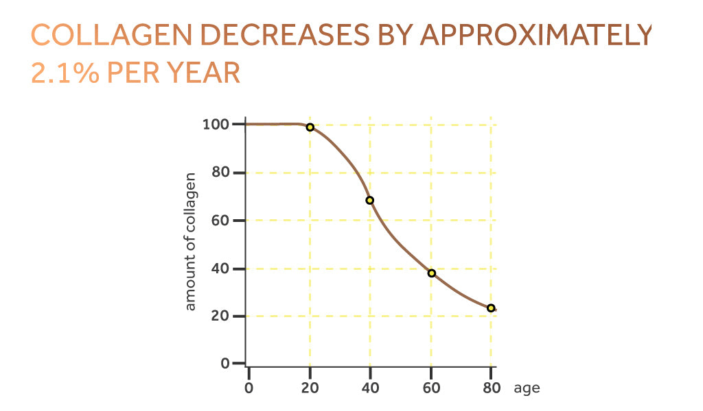 Graph showing the decline of collagen over time