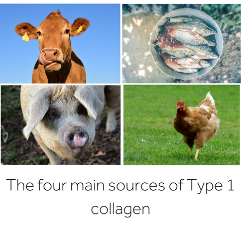4 main sources of Type 1 collagen