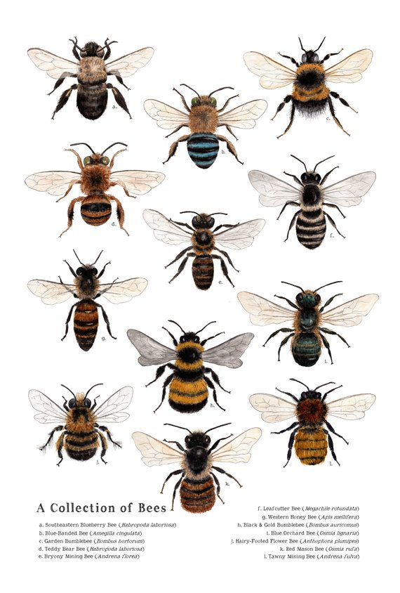 Collection of Bees Poster - Reservoir