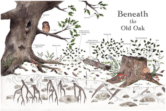 Beneath the Old Oak Poster - Reservoir
