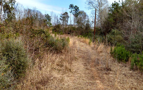 40 +/- Acres of Pine Timber Land