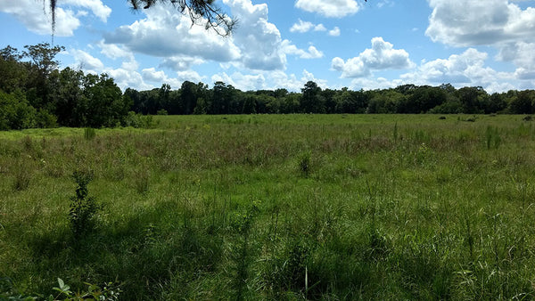 61+ Acres on State Highway 22