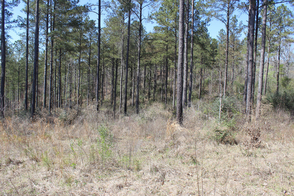 523 +/-ac Dallas County Estate