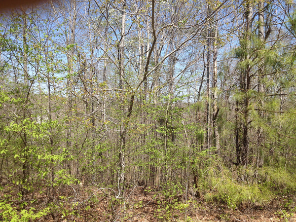 268 +/- acres Minter Tract
