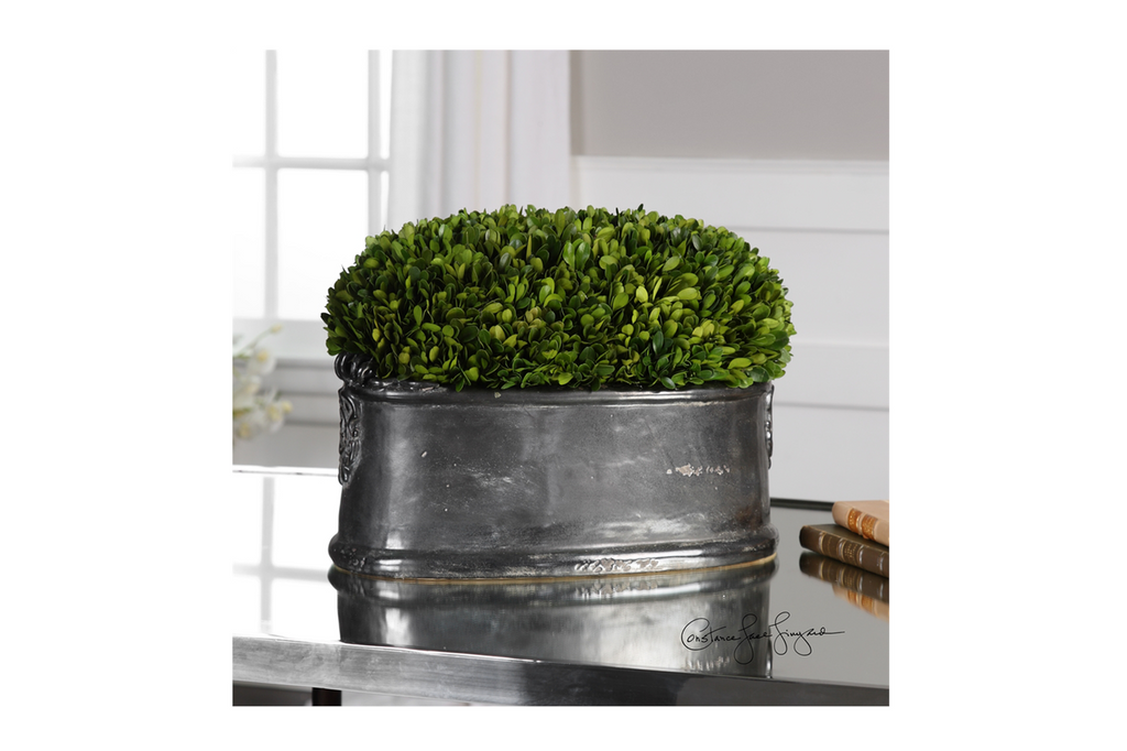 Preserved Boxwood, Dome Centerpiece