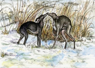 Iggy Greeting Card - A Winter Story - Vaux & James