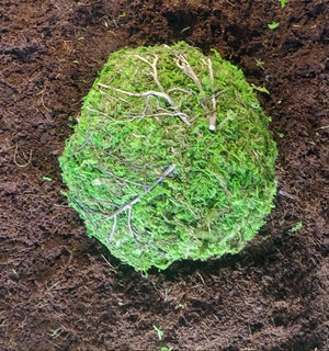 Mossy Dome Hide