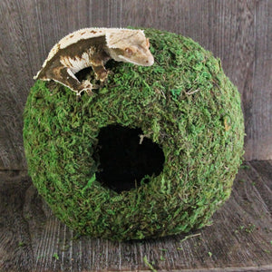 Mossy hide with holes