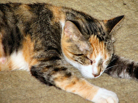 Good Names For Calico Cats