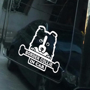 Border Collie In Car Dog Car Decal - I Love Cat Socks