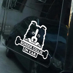 Border Collie In Car Dog Car Decal