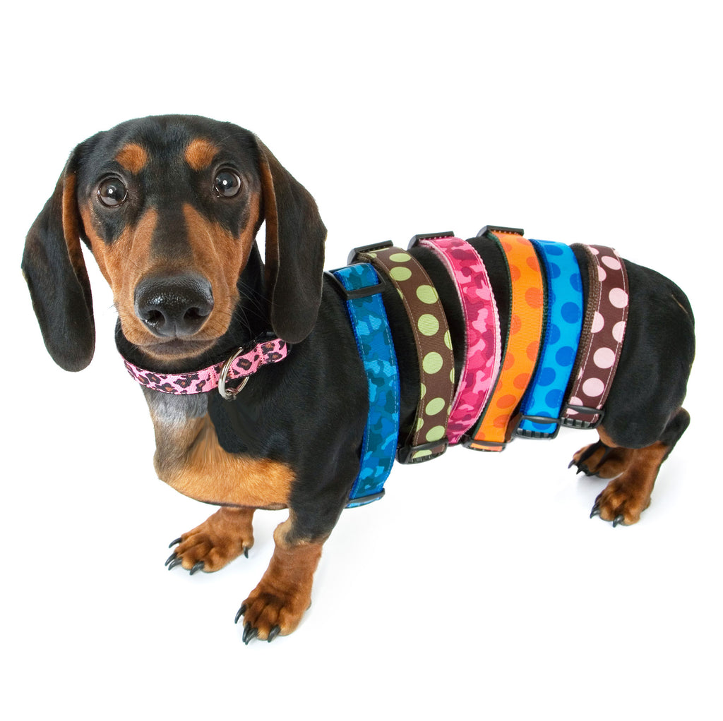 See ALL Our Collars