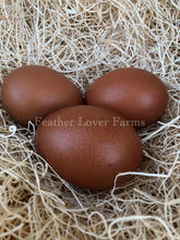 Lavender Marans Dark Brown Eggs | Feather Lover Farms