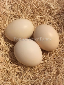 Feather Lover Farms Ayam Cemani Eggs
