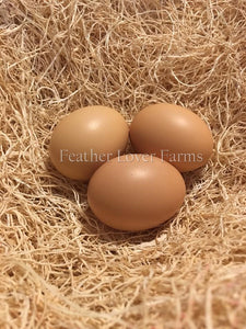 Double Laced Silver Barnevelder Eggs