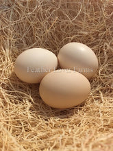 Greenfire Farms Ayam Cemani Eggs