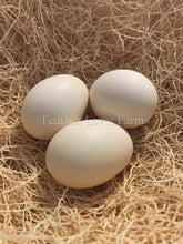Onagadori Phoenix Long Tail Eggs Feather Lover Farms