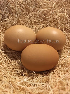 Silver Laced English Orpington Chicken Eggs