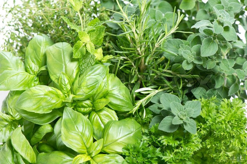 Freezing Herbs From Your Garden