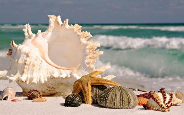 Decorating with seashells.