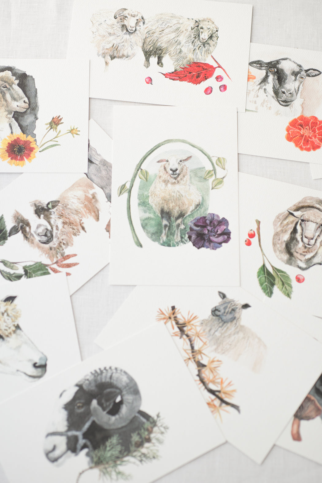 Sheep Breed Postcards