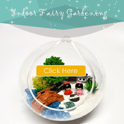 Indoor-Fairy-Gardening