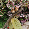 Birds on a Branch - Teelies Fairy Garden Store