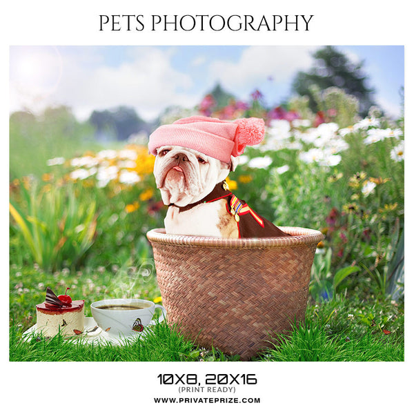BUDDY - PETS PHOTOGRAPHY - Photography Photoshop Template
