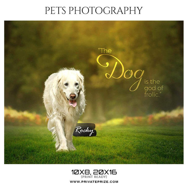 Rocky - Pets Photography Templates