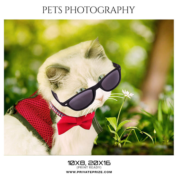 KENNY- PETS PHOTOGRAPHY - Photography Photoshop Template