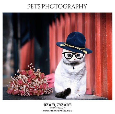 OSCAR - PETS PHOTOGRAPHY - Photography Photoshop Template