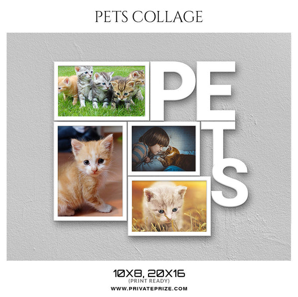 KITTY CAT COLLAGE - PETS PHOTOGRAPHY - Photography Photoshop Template
