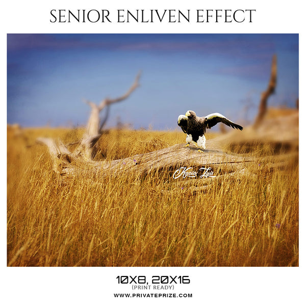 Kacia Luis - Senior Enliven Effect Photoshop Template - Photography Photoshop Template