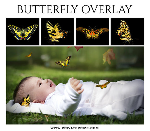 Butterfly Overlays - Photography Photoshop Template