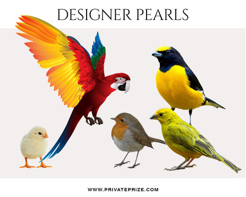 Birds- Designer Pearls - Photography Photoshop Template