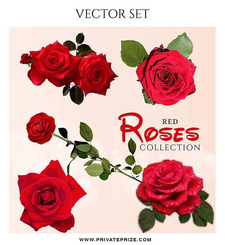 Red Rose Collection - Valentines Vector Graphics Set - Photography Photoshop Template