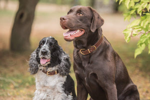 Introducing the dog squad - our new Dog Collars