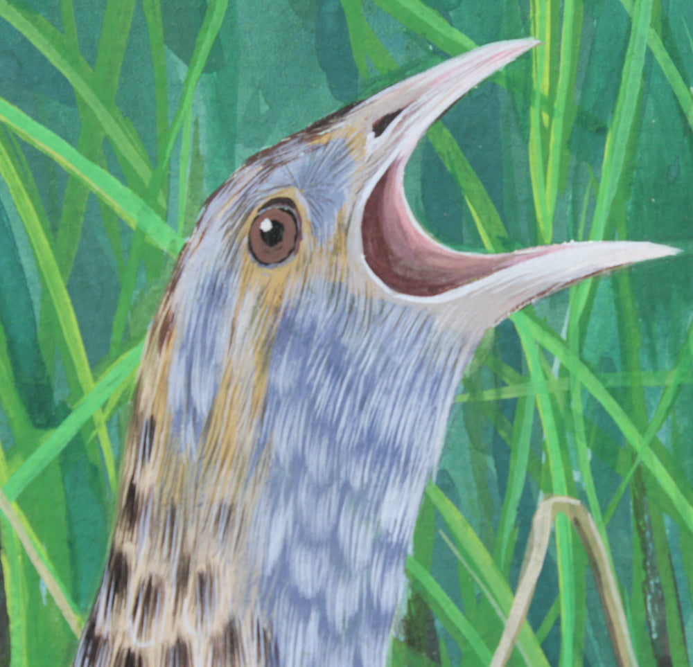 Corncrake on Rathlin Island - Gouache and Watercolour painting by Robert Spotten