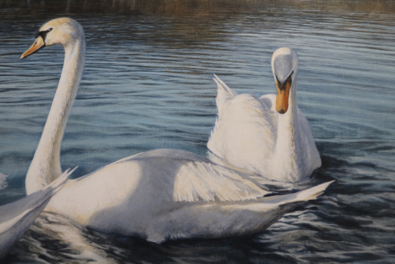 Detail of two swans, one seen sideways and the second swan facing the viewer. We can see the reflection of the trees in the water and the shadow of another swan on the sideway swan. The colour of the water is from medium to dark grey blue