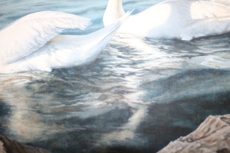 Detail of the reflection of the swans on the water.