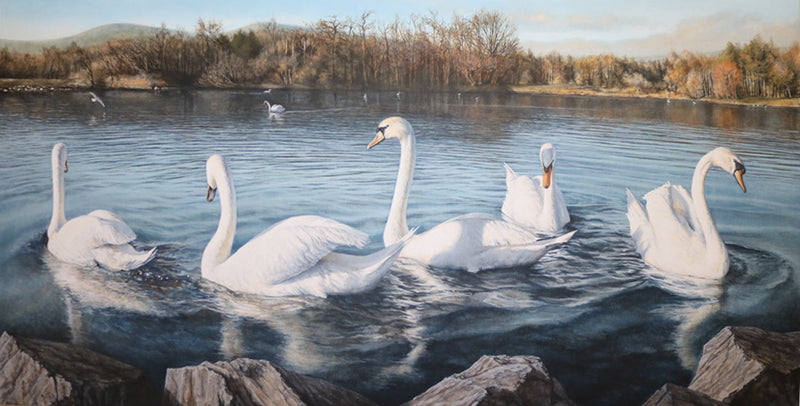 Another image of the acrylic painting of Belfast reservoir swans by Irish artist, John Coffey.