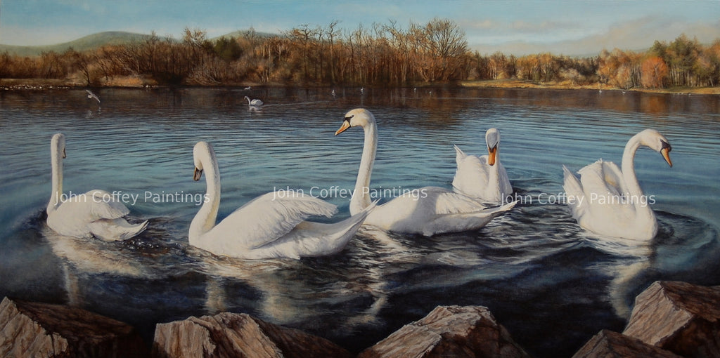 Irish landscape painting of a flock of swans on the Belfast reservoir. Rocks on the foreground, five swans are on the water, we can see their reflections and movement of the water, in the background there are more swans and trees in autumnal colours.